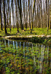 High Water -  Forest photo