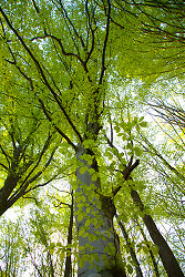 Trees ~ Forest picture from Aillevillers France.