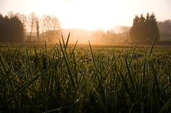 Morning Dew ~ Sunrise Photo from Aillevillers France.