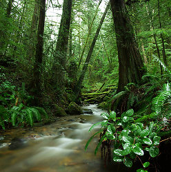 Gorge Creek ~ Rainforest picture from Cortes Island Canada.