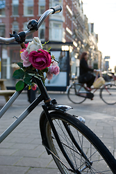 Flowers on the handlebars of an Amsterdam bicycle  ~ Bicycle picture from Amsterdam Netherlands.