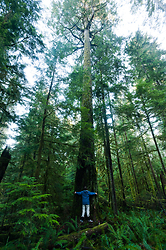 Tree Hug ~ Forest picture from Basil Brook, Cortes Island Canada.