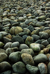 A Cobbled Beach - Cortes Island Beach photo