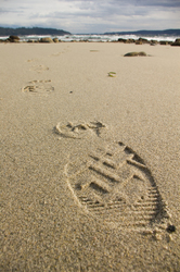 Boot Print - Cortes Island Beach photo