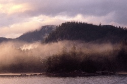 Morning Mist ~ Wilderness picture from Broughton Archipelago Canada.
