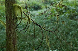 Twisting Twigs ~ Cedar Tree picture from Cortes Island Canada.