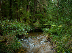 James Creek ~ Creek picture from Cortes Island Canada.