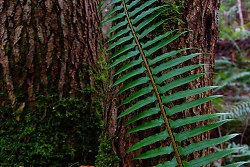 Fern + Tree -  Fern photo