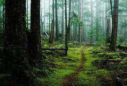 Path in the woods ~ Forest path picture from Cortes Island Canada.