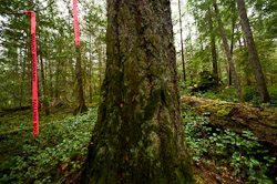 Falling Boundary II ~ Forest picture from Cortes Island Canada.