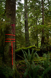 Falling Boundary ~ Forest picture from Cortes Island Canada.