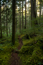 Green Valley Trail ~ Forest picture from Cortes Island Canada.
