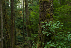 Life in Green Valley ~ Forest picture from Cortes Island Canada.