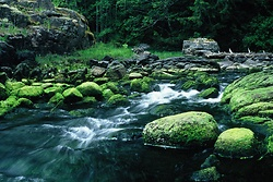 Emerald Creek -   photo