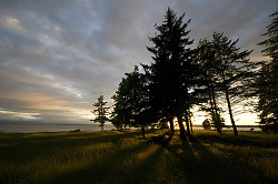 Trigonometry of Trees and Sun ~ Landscape  picture from Cortes Island Canada.
