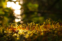 Mosses ~ Moss picture from Cortes Island Canada.