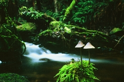 Mushroom picture from Cortes Island Canada.