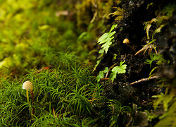 Small ~ Mushroom picture from Cortes Island Canada.