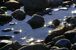 Stars ~ Tide Pool picture from Cortes Island Canada.