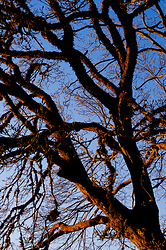 Branches + Sky ~ Tree picture from Cortes Island Canada.