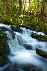 Falling Water ~ Waterfall picture from Cortes Island Canada.