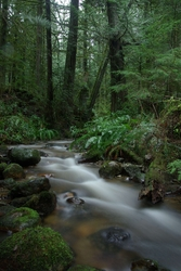 Gorge Creek - Cortes Island Creek photo