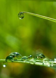 Rain on Couch Grass -  Droplet photo