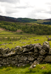 Stone Fence - Scotland Fence photo