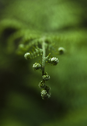 Hello, Fern -  Fern photo