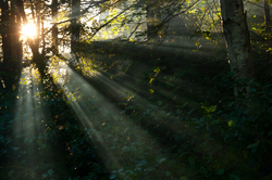 Forest Sunbeams 2 - Cortes Island Forest photo