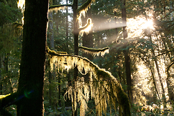Moss - Cortes Island Forest photo