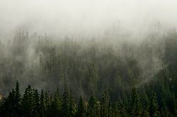 Cloud Shrouded Forest - Vancouver Island forest photo