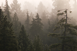 Foggy Forest - Cortes Island Forest photo