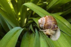 Inquiring Snail ~ Snail picture from France France.