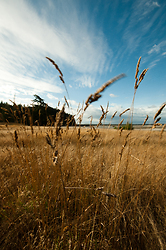 Gass Blowing in the Wind -  Grass photo