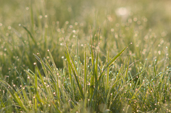 Wet Grass - Aillevillers Grass photo
