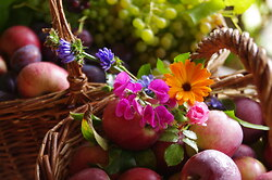Autumn Bounty -  harvest photo