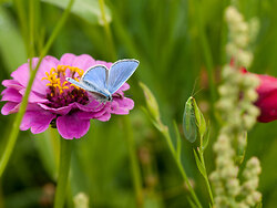 The Butterfly and The Lacewing -   photo