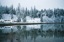 Winter Shorline - Cortes Island  photo