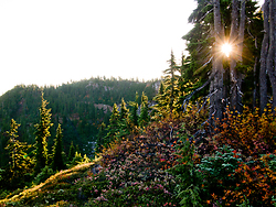 Mount Washington  trees and sun - Mount Washington  photo