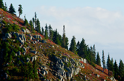 Mount Washington Slope - Mount Washington Mountain photo