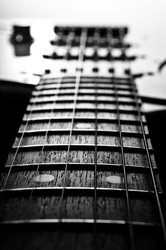 17th Fret -  Musical Instrument photo