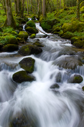 Forest Stream -  Forest Stream photo
