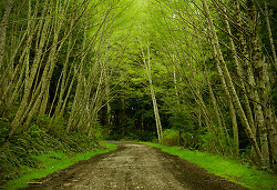 Springtime on Alder Lane - Cortes Island Rural Landscape photo