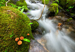 Creekside Mushroom Family ~ Creek picture from Slocan Valley Canada.