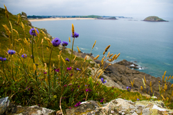Bretagne Wildflowers -   photo