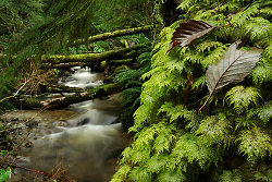Leaves on Moss - Cortes Island Tree photo