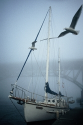 Seagull Patrol -  Sailboat photo