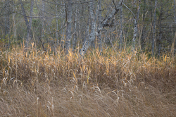 Swamp  Strata  - Cortes Island Wetland-scape  photo