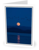 Moonrise Migration - Birds At Night photo from Safety Cove Calvert Island BC, Canada